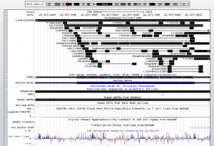 Un exemple devenu classique des bienfaits du data-mining à grande échelle : text2genome
